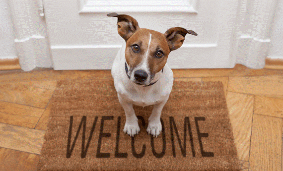 Are You A Pet Friendly Landlord?